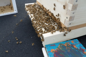 2nd hive