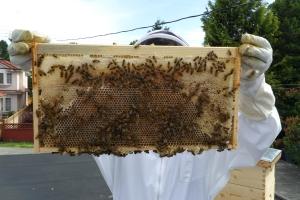 Honey and Nectar