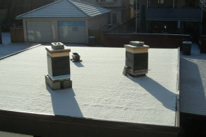 Snowy Hives