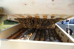 Bee's under quilt box