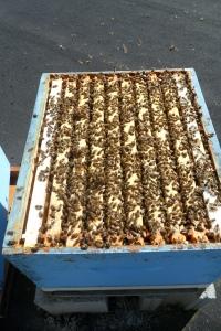 Bottom blue box March 25 2012
